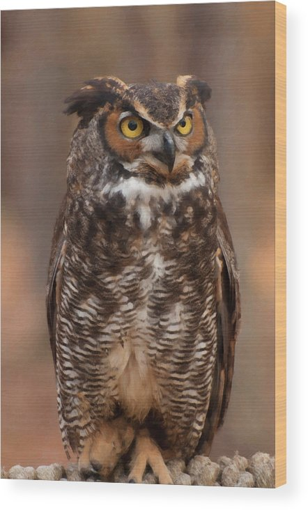 Great Horned Owl Wood Print featuring the digital art Great Horned Owl Digital Oil by Chris Flees