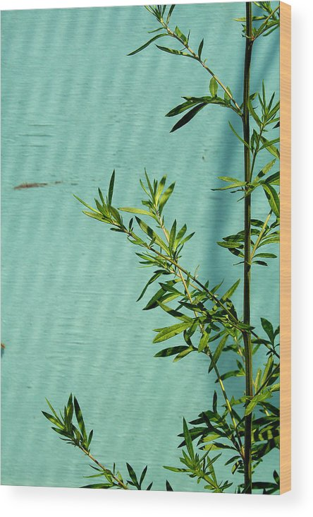 Green Wood Print featuring the photograph Green On Aqua 1 by Art Ferrier