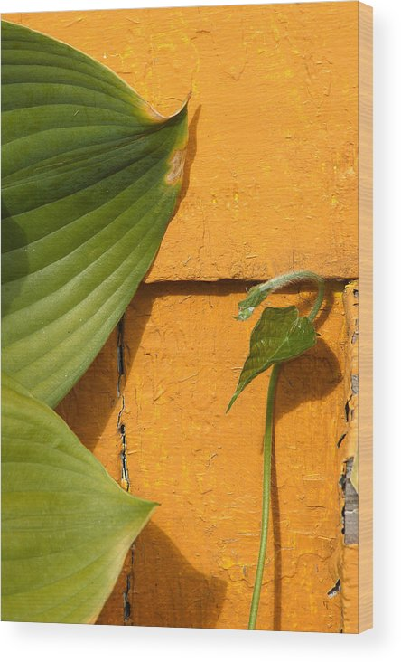 Color Wood Print featuring the photograph Green On Orange 4 by Art Ferrier