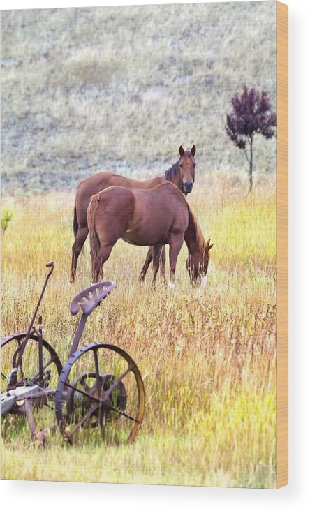 Horses Wood Print featuring the photograph Hello by Naman Imagery