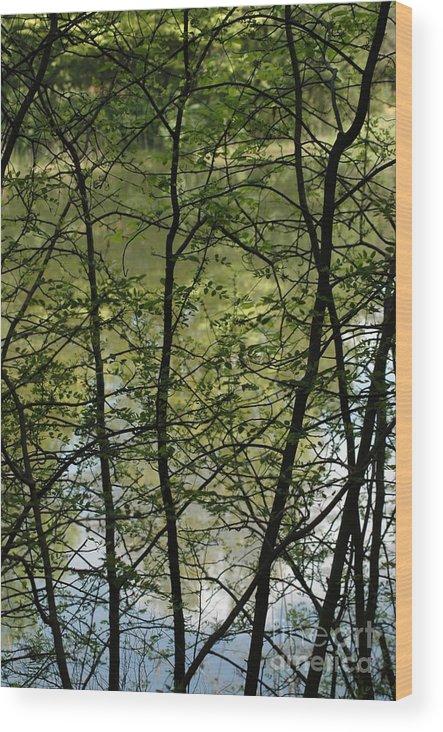Usa Wood Print featuring the photograph Hidden Pond Natural Fence by LeeAnn McLaneGoetz McLaneGoetzStudioLLCcom