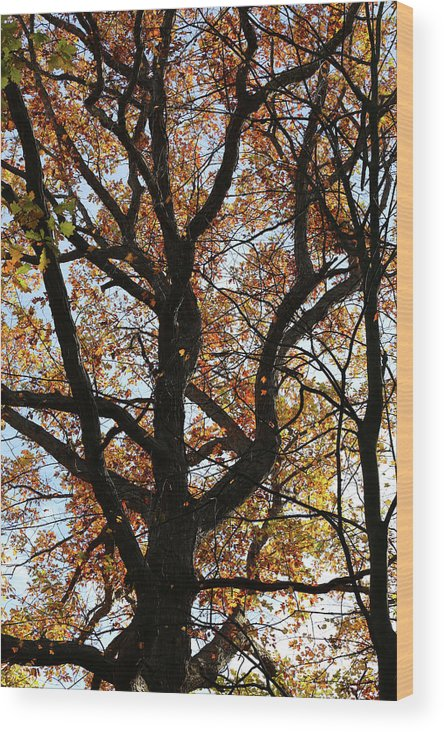 Fall Wood Print featuring the photograph Hiking Trail Fall 2017 8 by Mary Bedy
