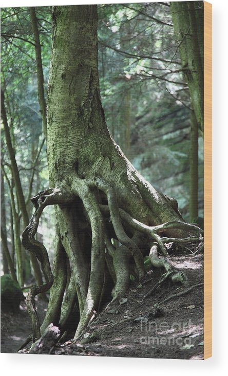 Trees Wood Print featuring the photograph Hold On To Me. by Amanda Barcon