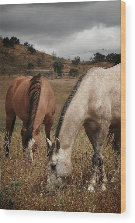 Landscape Wood Print featuring the photograph Horses by Ron Morales