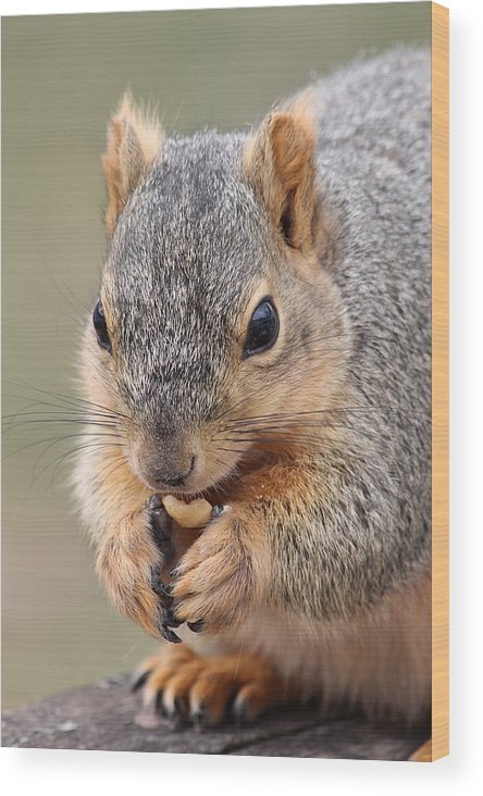Squirrel Wood Print featuring the photograph I Love Peanuts by Lori Tordsen