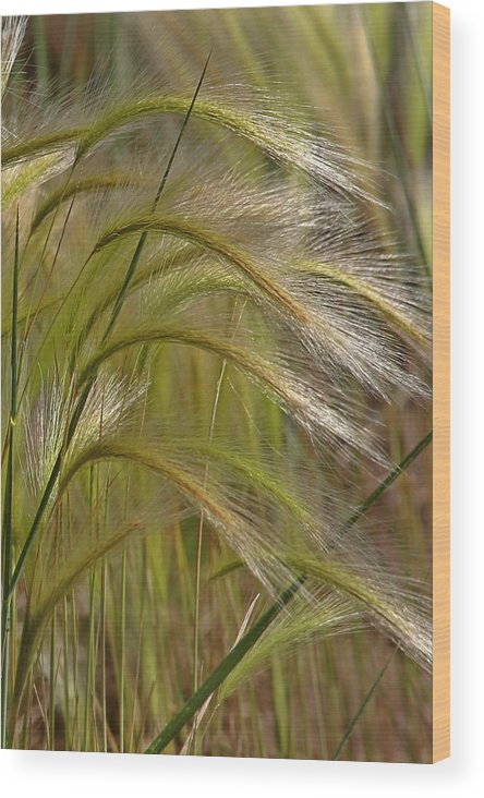 Grass Wood Print featuring the photograph Indiangrass Swaying Softly With The Wind by Christine Till