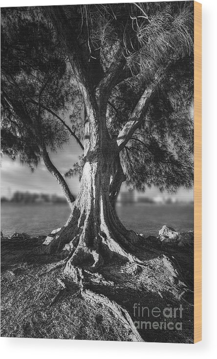 Intercoastal Pine Wood Print featuring the photograph Intercoastal Pine by Marvin Spates
