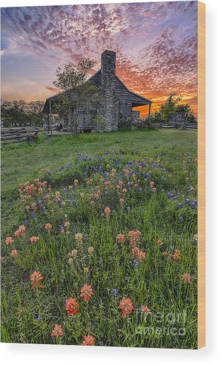 Independence Wood Print featuring the photograph John P Coles Cabin And Spring Wildflowers At Independence - Old Baylor Park Brenham Texas by Silvio Ligutti
