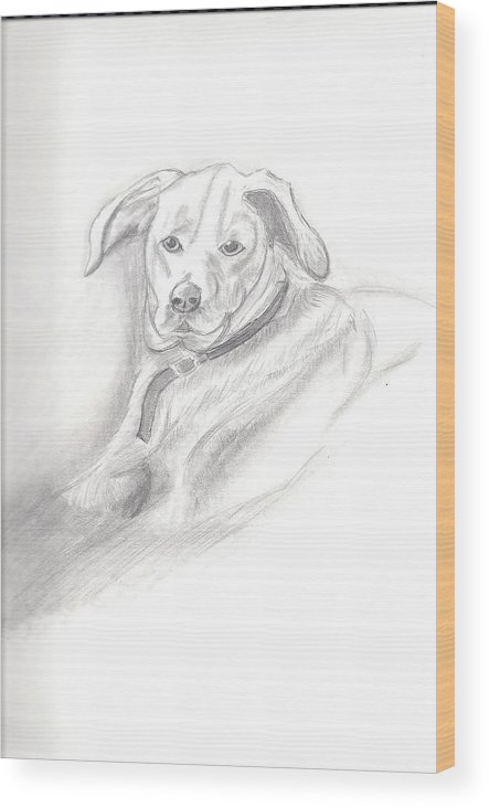 Dog Wood Print featuring the drawing Labrador Retreiver by Judy Moses