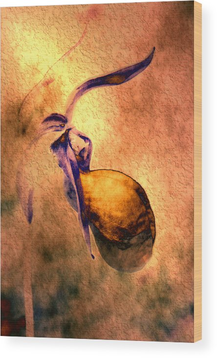 Wood Print featuring the photograph Lady Slipper by Roger Soule