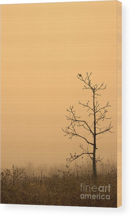 Tree Wood Print featuring the photograph Last Leaves by Timothy Johnson