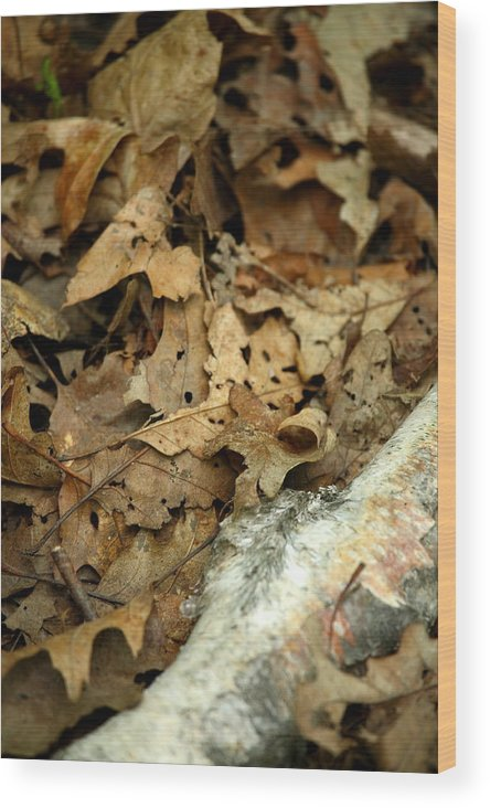 Leaf Wood Print featuring the photograph Leaf Litter by Mark Platt