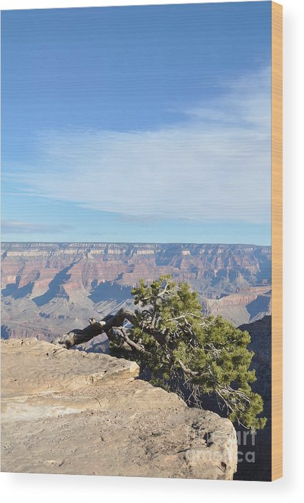 Grand Wood Print featuring the photograph Life On The Edge by Sarah Tate