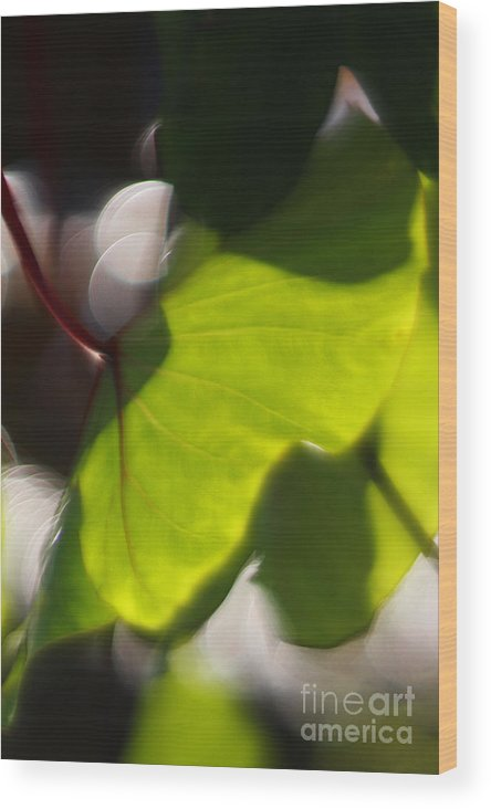 Green Wood Print featuring the photograph Light I by Katherine Morgan