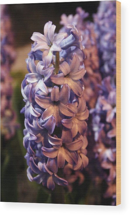 Lilac Wood Print featuring the photograph Lilacs by Jeff Porter