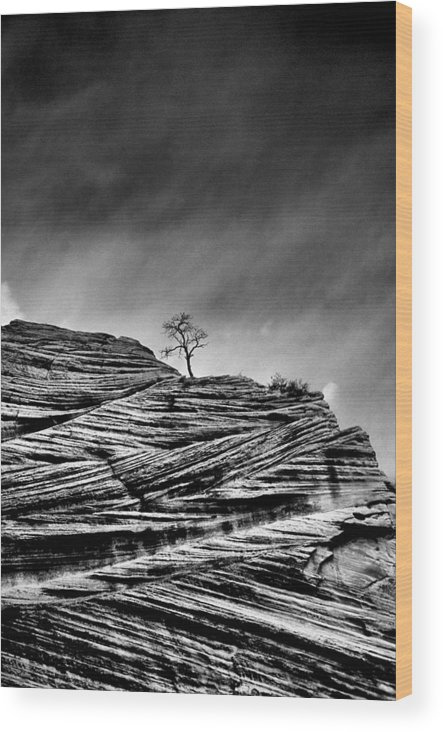 B&w Wood Print featuring the photograph Lone Tree Rid by Sarah-jane Laubscher