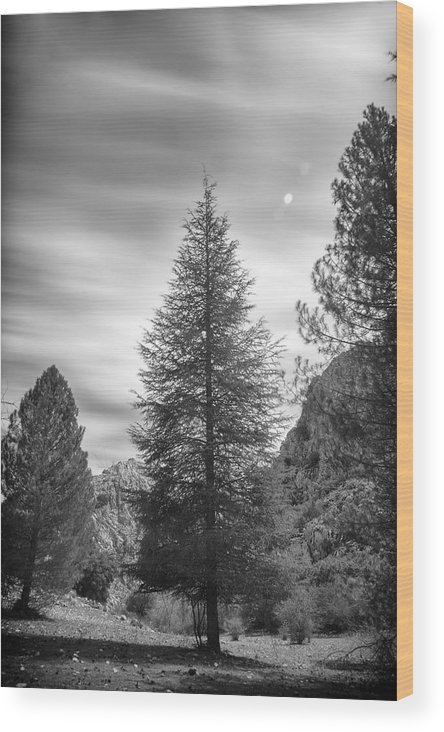 Mono Wood Print featuring the photograph Looking For The Sky Into The Woods by Guido Montanes Castillo