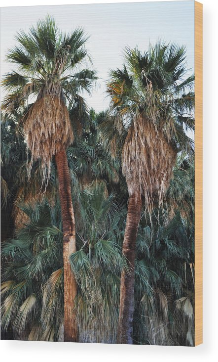 Palm Oasis Wood Print featuring the photograph Thousand Palms Oasis by Kyle Hanson