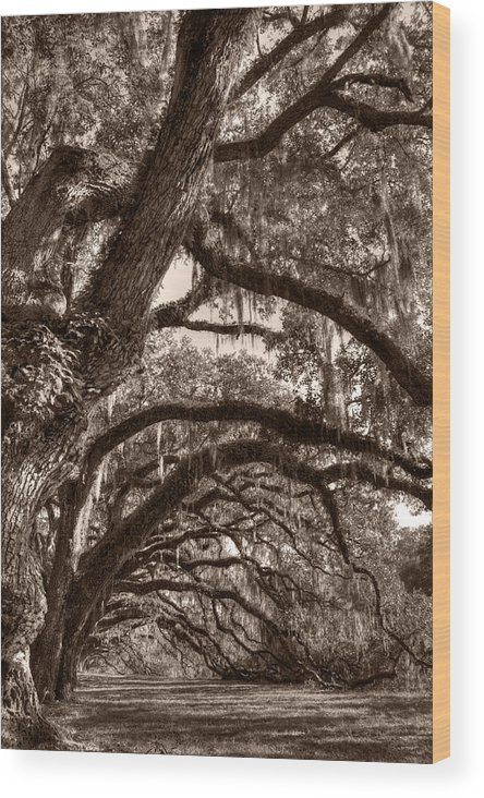 Live Oak Wood Print featuring the photograph Magnificant Live Oak Trees by Dustin K Ryan