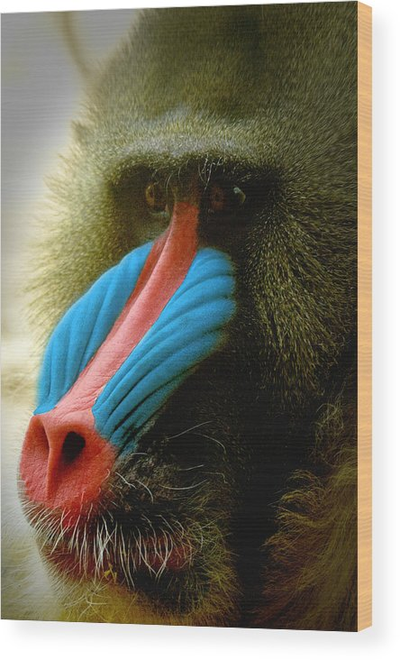 Mandrill Wood Print featuring the photograph Mandrill by Richard Henne