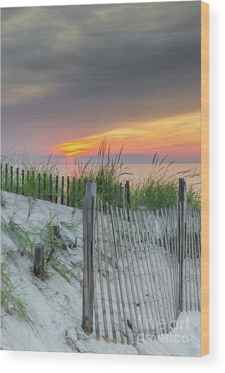 Sand Wood Print featuring the photograph Mayflower Beach by Mike Ste Marie