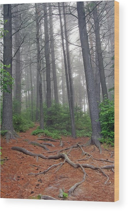 Ontario Wood Print featuring the photograph Misty Morning In An Algonquin Forest by Peter Pauer
