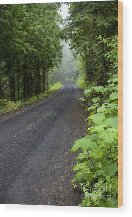 Road Wood Print featuring the photograph Misty Mountain Road by Idaho Scenic Images Linda Lantzy