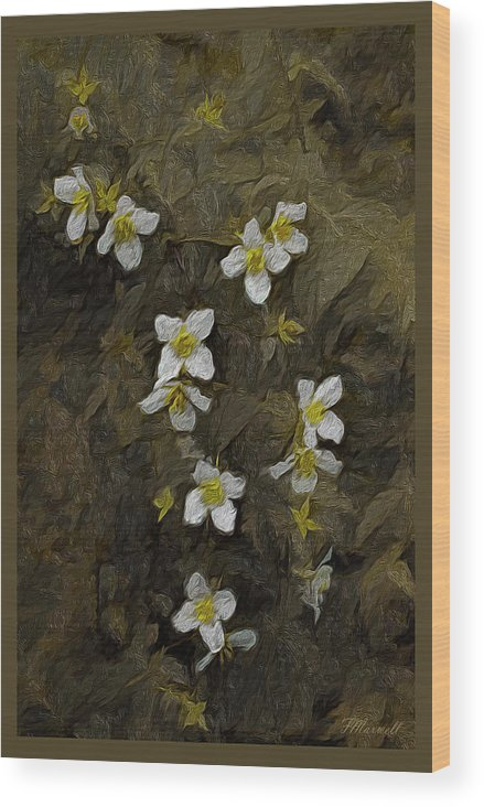 Mock Orange Wood Print featuring the photograph Mock Orange Impression by Frank Maxwell