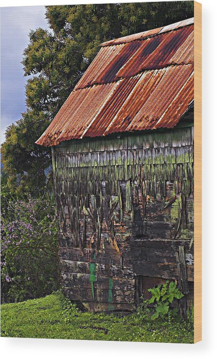 Moss Wood Print featuring the photograph Moss Covered House-st Lucia by Chester Williams