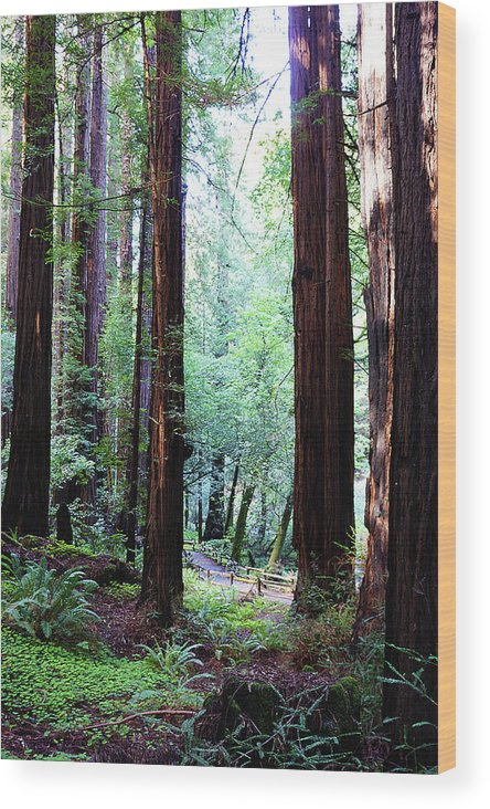 Redwoods Wood Print featuring the photograph Muir Woods 1 by Megan Swormstedt
