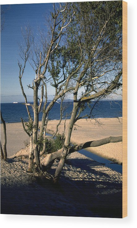 Denmark Wood Print featuring the photograph Nordic Beach by Flavia Westerwelle
