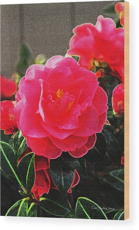Not A Rose Wood Print featuring the photograph Not A Rose by Tom Janca