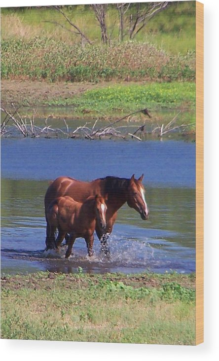 Horses Wood Print featuring the photograph Okay Time To Go. by Lilly King