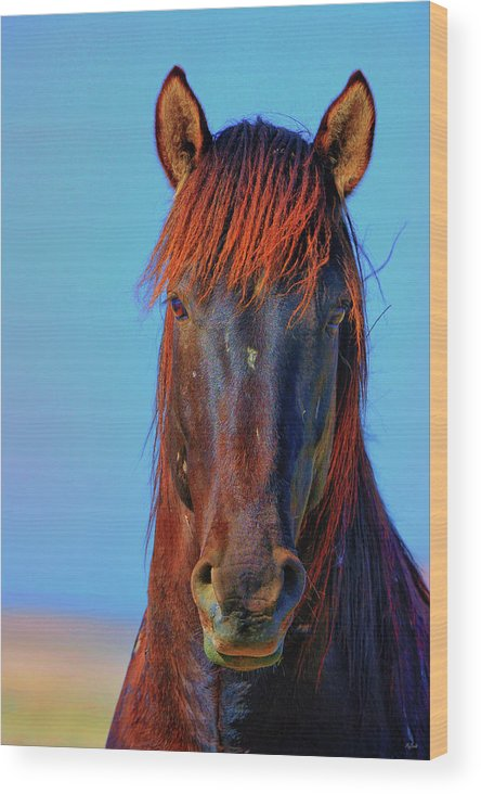 Horse Wood Print featuring the photograph Onaqui Wild Stallion Portrait by Greg Norrell