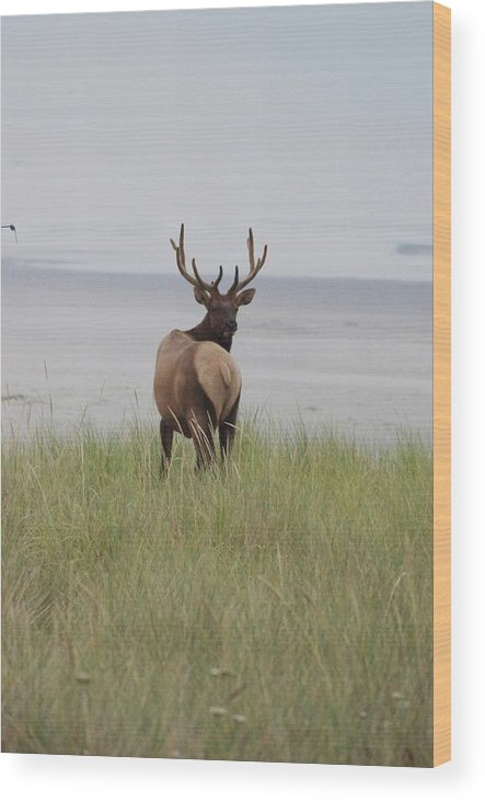 Elk Wood Print featuring the photograph One Last Look by Angi Parks