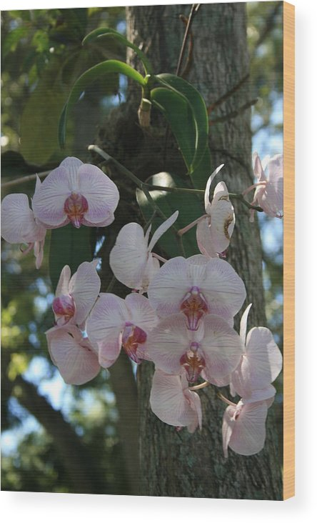 Flower Wood Print featuring the photograph Only In The Tropics by Allan E Dooley Jr