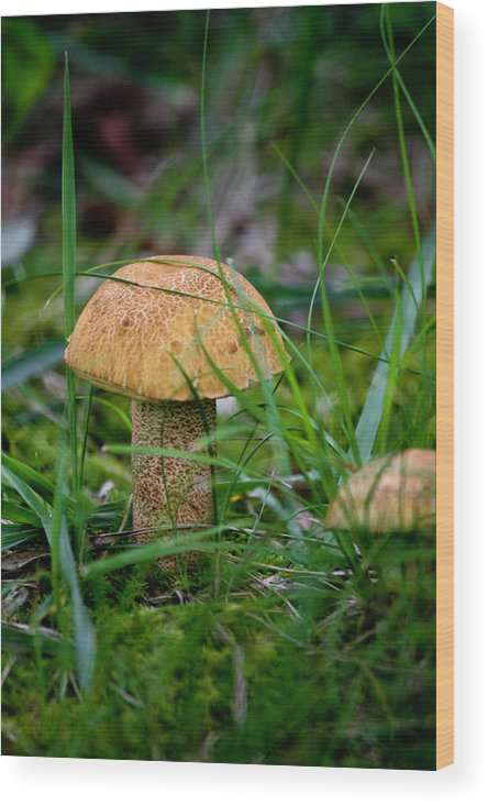 Fungus Wood Print featuring the photograph Orange Cap by Teresa Mucha