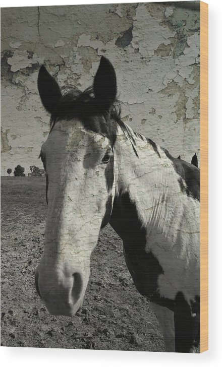 Horse Wood Print featuring the photograph Paint by Darlyn Shenold