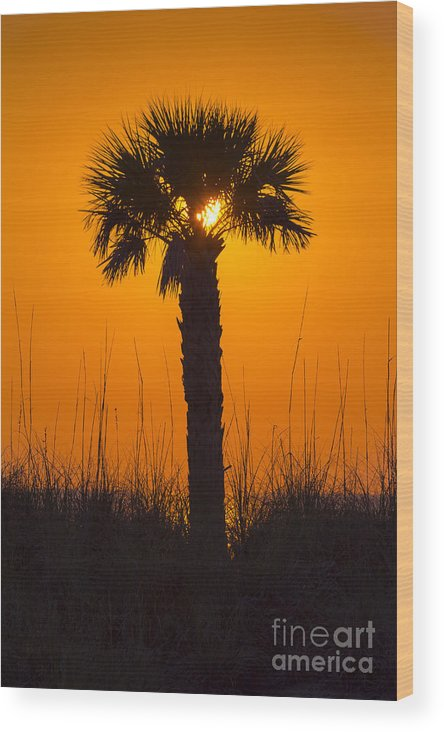 Cove Wood Print featuring the photograph Palm Light by Marvin Spates