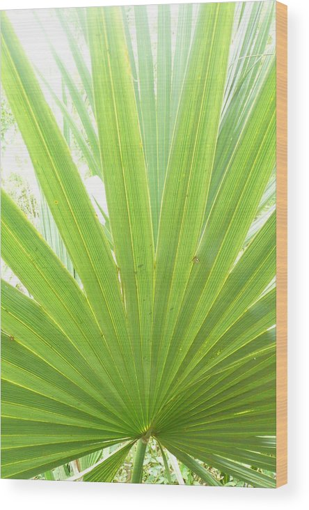 Green Wood Print featuring the photograph Palmetto by Kathy Schumann