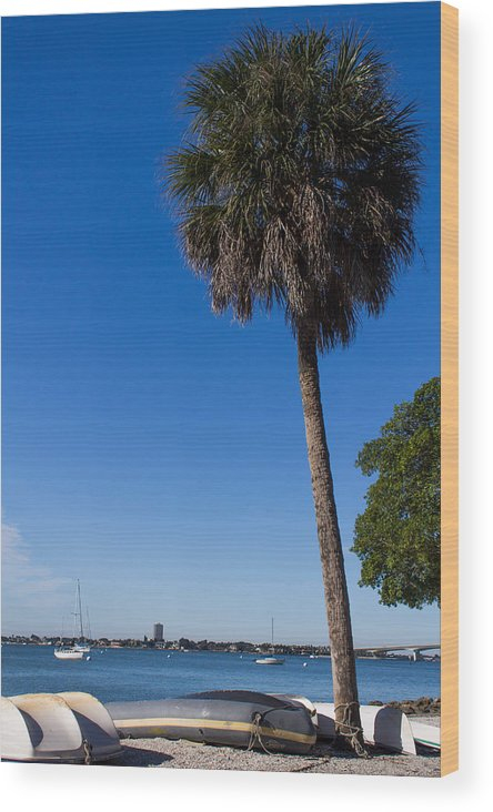 Marina Jacks Wood Print featuring the photograph Paradise In Sarasota, Fl by Michael Tesar