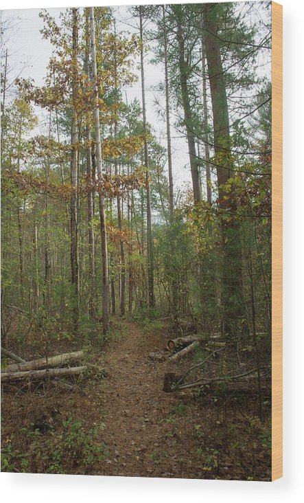 Autumn Wood Print featuring the photograph Path In The Woods by Adam Gladstone