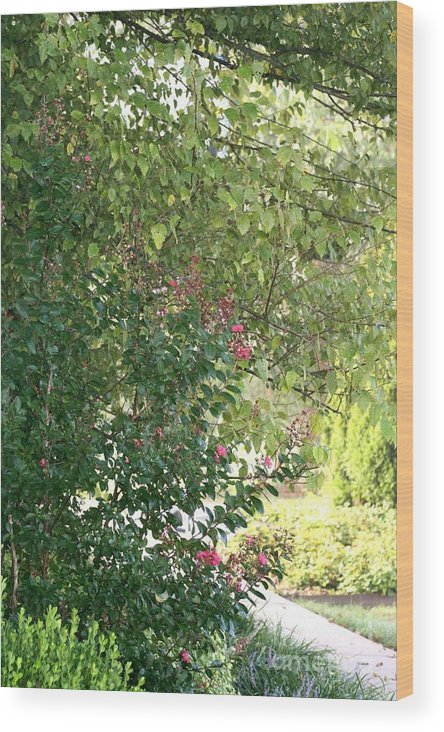 Path Wood Print featuring the photograph Pink And Green Path by Nadine Rippelmeyer