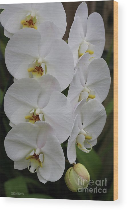 Orchids Wood Print featuring the photograph Purity by Deborah Benoit