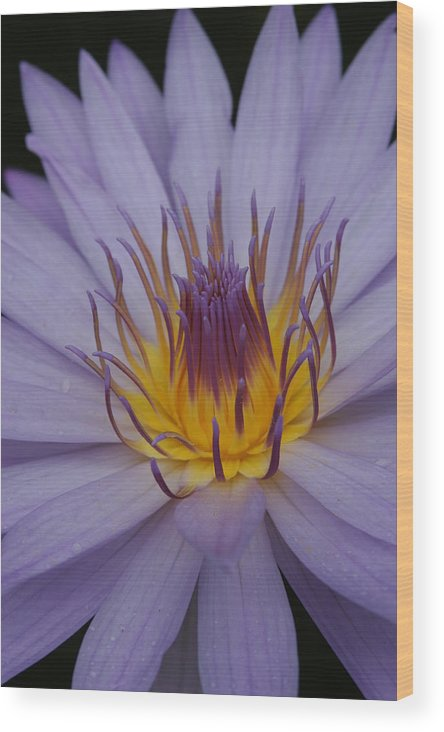 Purple Flower Wood Print featuring the photograph Purple Flower by Linda Russell