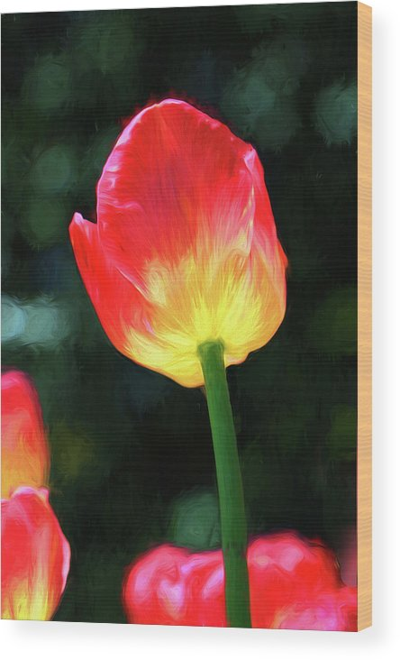 Background Wood Print featuring the photograph Red And Yellow Tulip - Photopainting by Allen Beatty