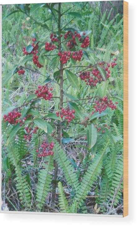 Photograph Wood Print featuring the photograph Red Berries by Tara Kearce