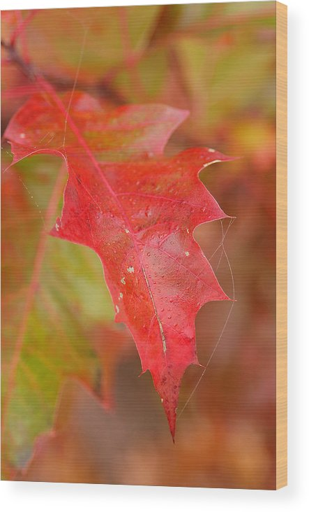 Oak Leaves Wood Print featuring the photograph Red Silk by Linda McRae