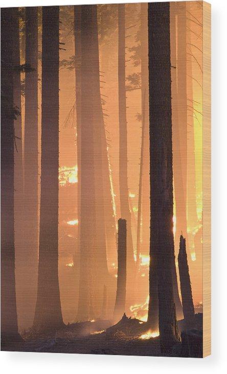 Landscape Wood Print featuring the photograph Rejuvenation by Charlie Osborn