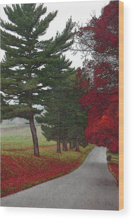 Seasonal Fall Leaves Trees Impressionistic Gordon Beck Art Wood Print featuring the photograph Road Show by Gordon Beck
